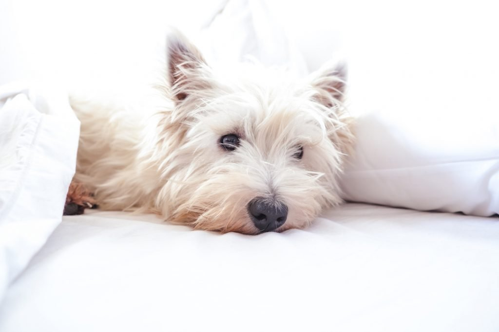 Read more on Whitecourt Pet Friendly Hotels and Adventures