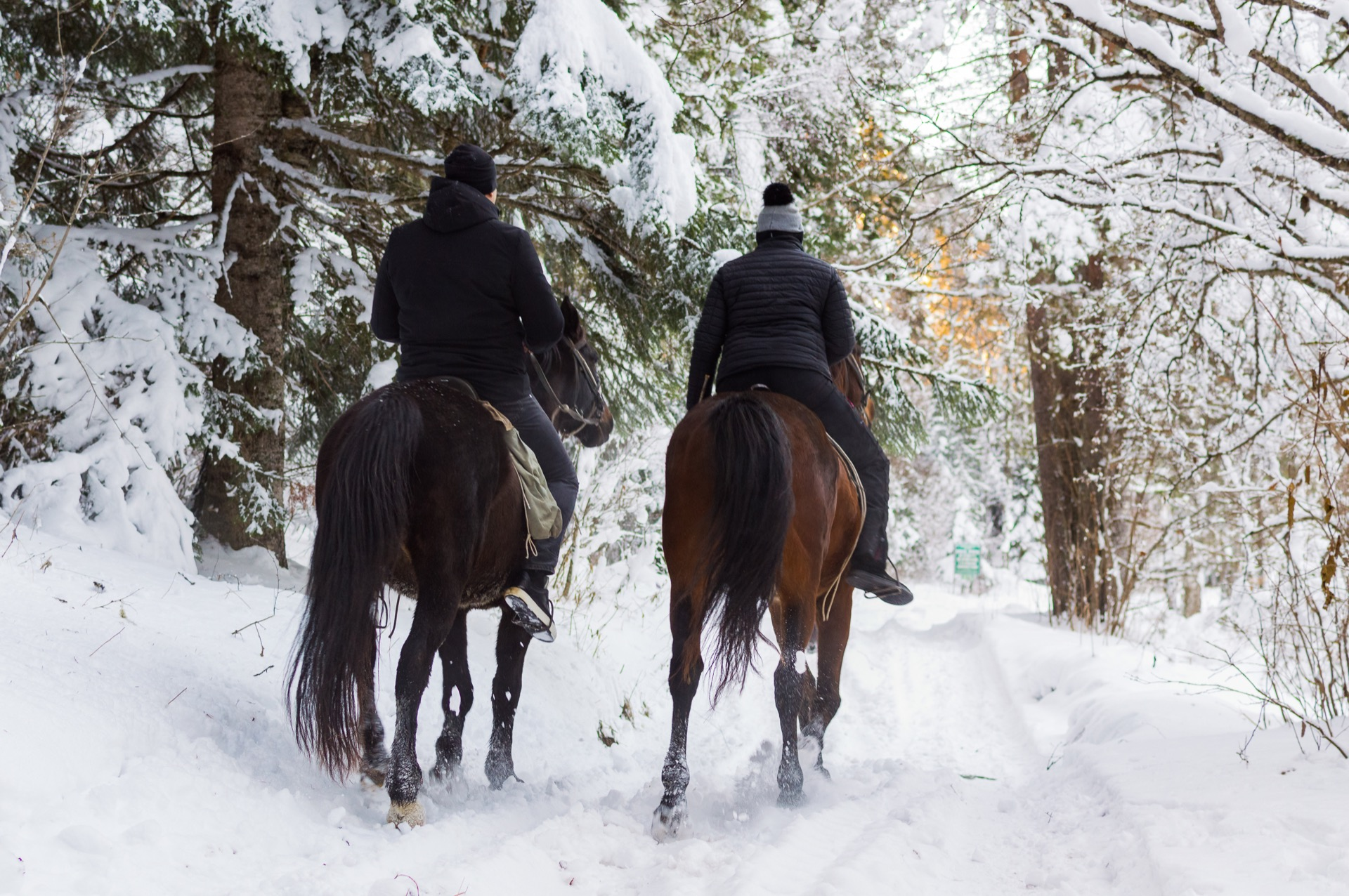 Kelowna couple on horseback ride through Myra Canyon