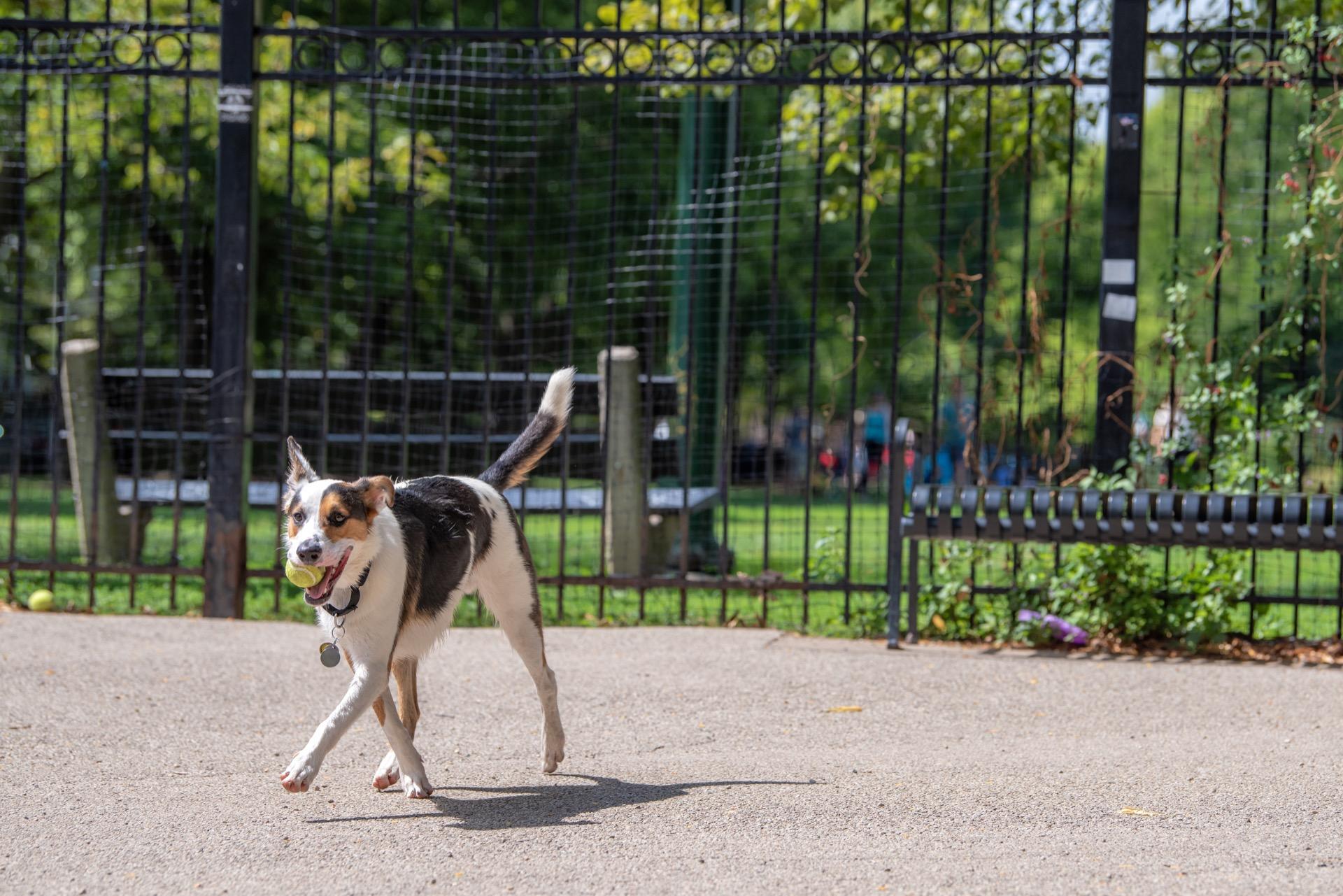 Dog in Kelowna dog park